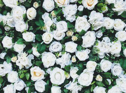 De kostbaarste roos